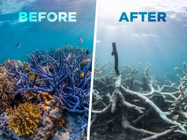 Before GBR after GBR